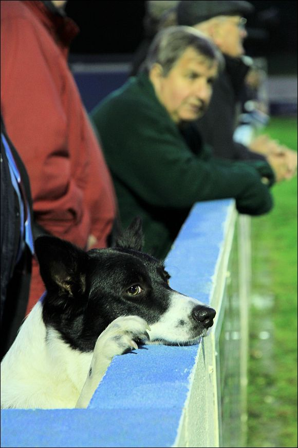Yes that's right, it's a dog watching the Colwyn Bay v's City game!